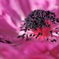 写真: 春   色  1