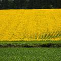 写真: 黄色と緑色
