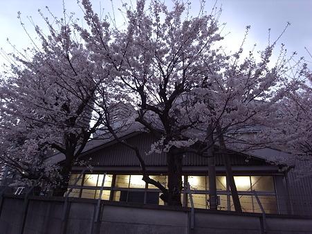 南千住の桜 2010-4-3 06