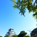 秋晴れの大阪城
