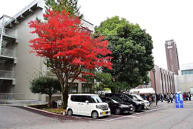 京都大学時計台と紅葉