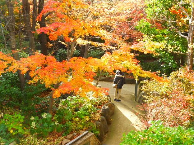 新梅田シティ 中自然の森