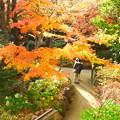Photos: 新梅田シティ 中自然の森