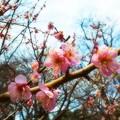 Photos: 三吉野