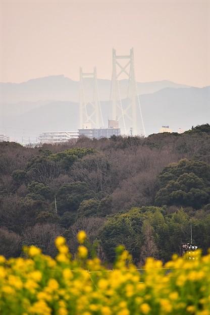 丘の上からの明石海峡大橋