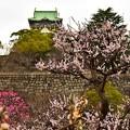 梅の名所 大阪城