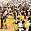 写真: 木の下でお絵かきや塗り絵