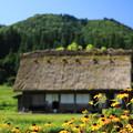 Photos: 里山の夏