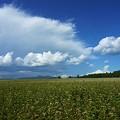 写真: そばの実畑
