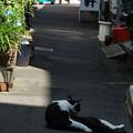 写真: 午後の猫