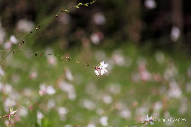 静かに咲く花