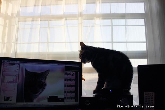 編集をチェックする猫