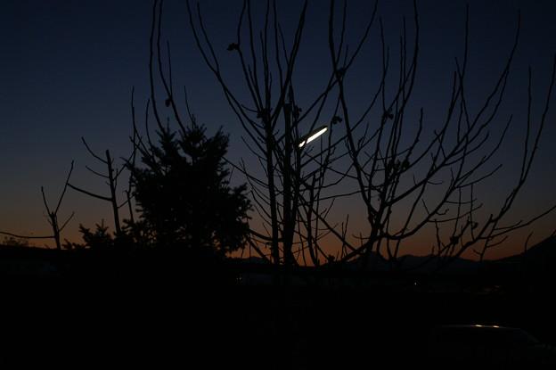 Photos: 夕暮れ時の庭