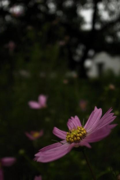 写真: RIMG10876