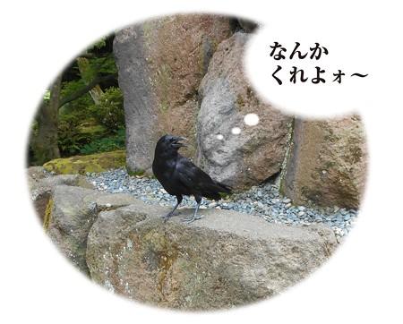 金沢番外編_運が向くか。 | ヤ ン パ の ク ニ ャ ン に ょ - 楽天ブログ