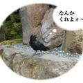 Photos: 76_頭のいいカラス