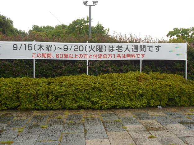 0920_なんとタダ