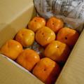 Photos: 1025_三重県の次郎柿