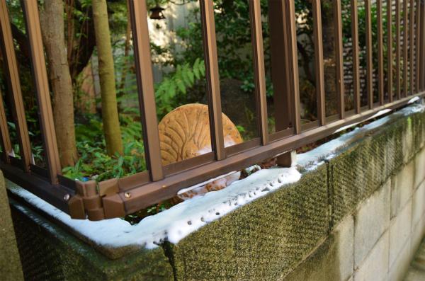 空き家の庭との境界を中心にタップリと猫よけスプレーを塗布