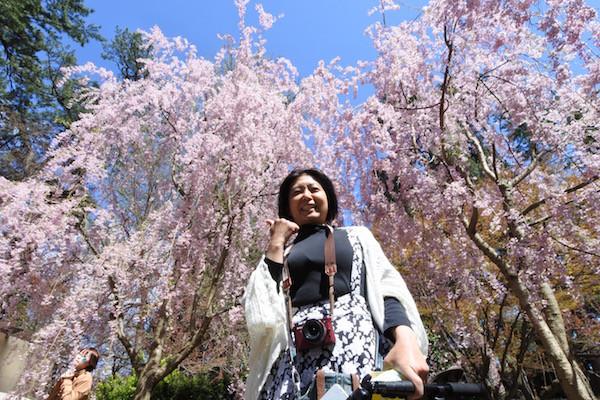 まるでアバターのエイワの木のように神秘的な美しさのしだれ桜