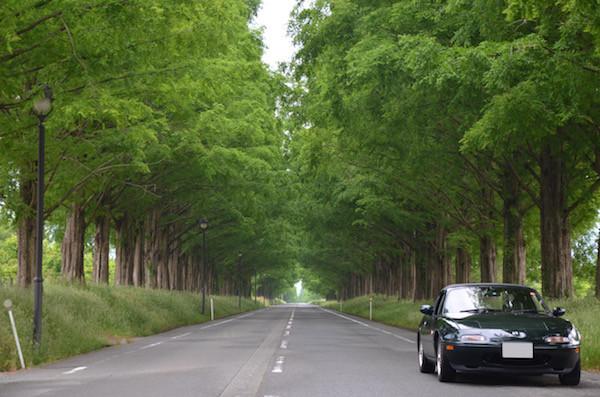 マキノのメタセコイヤ並木道まで寄り道