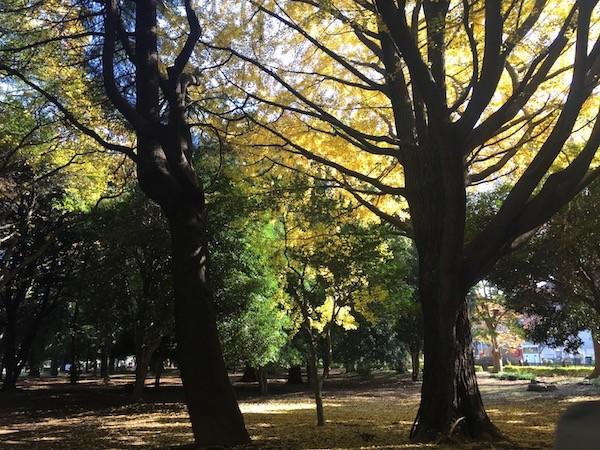 木漏れ日の眩しい代々木公園