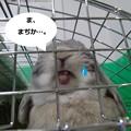 Photos: え2