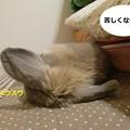 Photos: すきまっち4