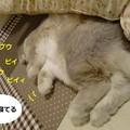 Photos: すきまっち5
