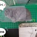 Photos: ぺろ7