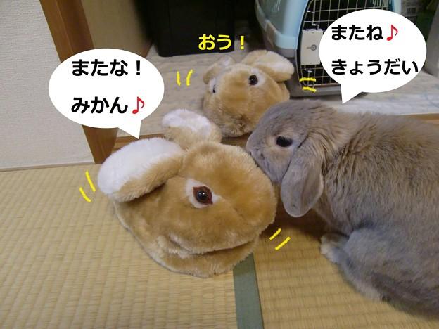 Photos: すりっぱ7