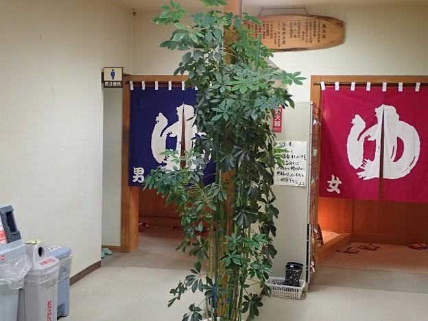 写真: 28 11 青森 桜温泉 2