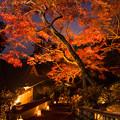 Photos: 大興善寺の紅葉♪3
