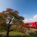 Photos: 柳坂曽根の櫨並木とローカル列車♪
