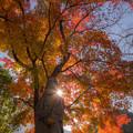 Photos: 篠栗明石寺の紅葉♪