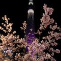 河津桜と東京スカイツリー♪