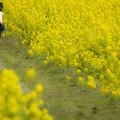 福ふくの里の菜の花♪