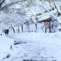 大雪の参道