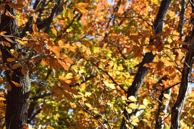 Photos: 広葉樹の森