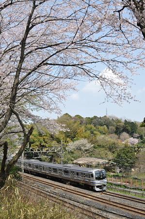 肥田牧場前の桜 08