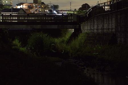 宝来橋のホタル 01(再加工)