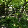 Photos: 物外軒の緑あふれる庭
