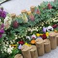 写真: 春の花の植え込み