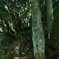写真: 御岩山 光の柱