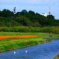 写真: 水戸の秋