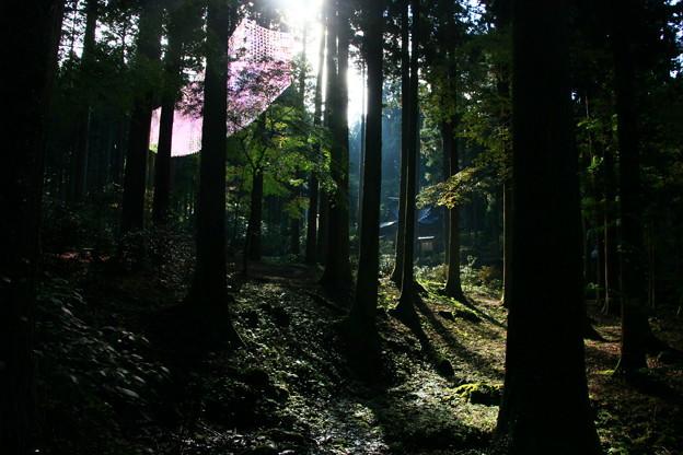 茨城県北芸術祭 353  御岩神社
