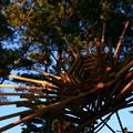 写真: 茨城県北芸術祭 307  小貝ケ浜