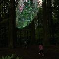 茨城県北芸術祭 357  御岩神社