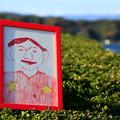 写真: 茨城県北芸術祭 101  天心記念五浦美術館