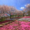 写真: 静峰ふるさと公園
